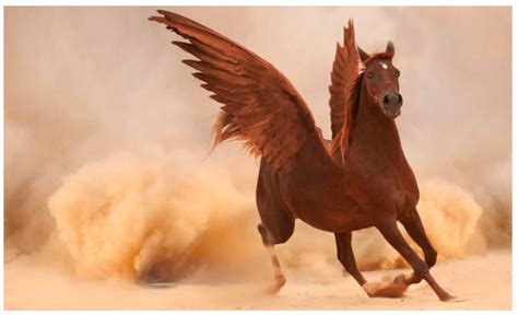 Photoshop montage tutorial: putting wings on a horse