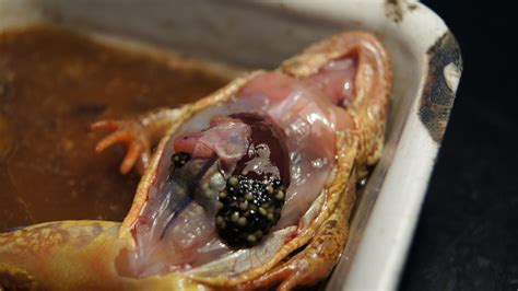 File:Frog dissection, 7