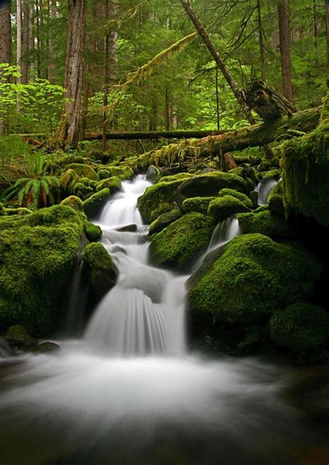 The 34 Most Beautiful Forests In The World… I'd Love To