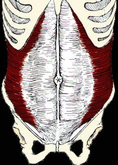 gluteal muscles color diagram - Google Search   glutes